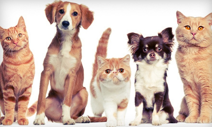 TNT Pet Services - Country Overlook: One Grooming Session for a Small, Medium, or Large Dog or a Cat, or $25 for $50 Worth of Pet Sitting from TNT Pet Services