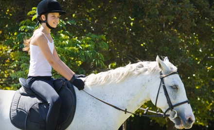 Private 1-Hour Horseback-Riding Lesson for 1 Person (a $50 value) - Lori Ragland Performance Horses in Kyle