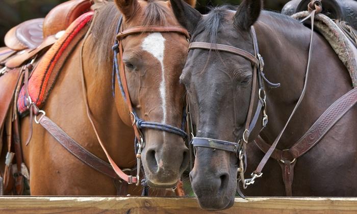 Charmingfare Farm - Charmingfare Farm: $35 for Fall Horse Trail Ride for One at Charmingfare Farm ($65 Value)
