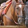 46% Off Horse Trail Ride at Charmingfare Farm