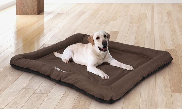 Coussin Pour Chien Groupon Shopping