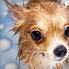 Up to 55% Off Animal Care in Marina del Rey
