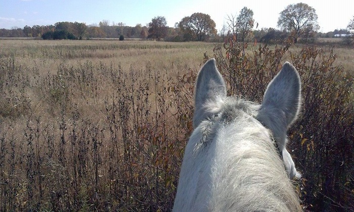 Light Rein Farm, Llc - Carleton: One-Hour Horseback-Riding Lesson at Light Rein Farm (65% Off)