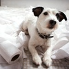 Up to 53% Off Dog-Obedience Course