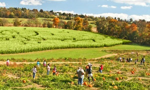 Up to 38% Off Corn Maze Admission at Jumbo's Pumpkin Patch at Jumbo's Pumpkin Patch, plus 6.0% Cash Back from Ebates.