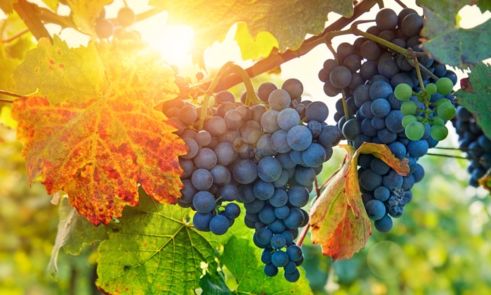 Hudson Valley Hike and Wine Tastings at Two Vineyards - Chelsea: Hike the Hudson River Valley and Sample Wines at Two Local Vineyards. Transportation Included.