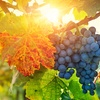 Hike the Hudson River Valley and Sample Wines at Two Local Vineyards
