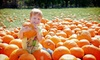 KC Pumpkin Patch & Corn Maze - Gardner: KC Pumpkin Patch and Corn Maze Visit for Two or Four (Up to Half Off)