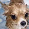 38% Off Grooming Services