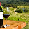 Half Off Wine Tasting at Daveste' Vineyards
