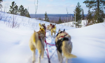 Private Dog Sledding Adventure for Two, Four, or Six in Algonquin Park (Up to 60% Off)