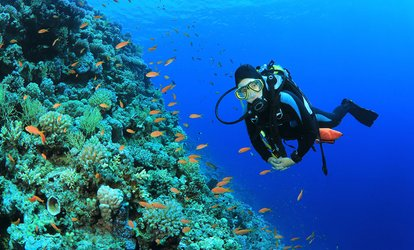 image for Guided <strong>Scuba</strong> Diving Tour for One, Two, or Four Beginners at Try <strong>Scuba</strong> Diving Key West (Up to 50% Off)