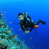 38% Off Scuba Certification Course at Blue Holic Scuba