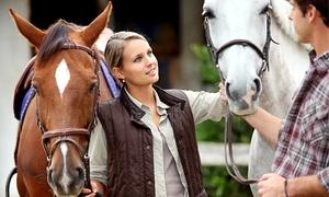 Reitschule Lichtenhorst: 4 Std. Pferdecoaching mit Markworth Coaching in der Reitschule Lichtenhorst ab 59 € (bis zu 90% sparen*)