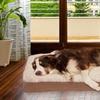 Furhaven Ultra-Plush Orthopedic Pet Bed