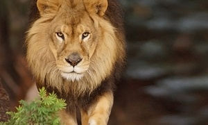 Oakland Zoo: Admission to the Oakland Zoo for a Child, Adult, or Family (Up to 33% Off)