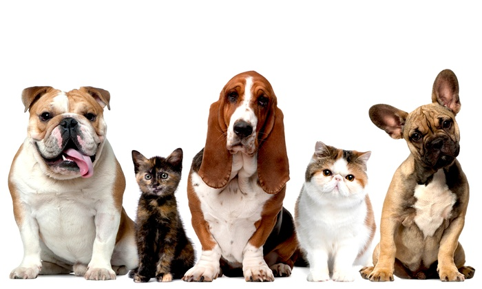 The Paw Depot - Stemmons Crossing: Dietary Analysis or Behavior Consultation for a Dog or Cat or $5 for $10 Worth of Pet Food or Products at The Paw Depot