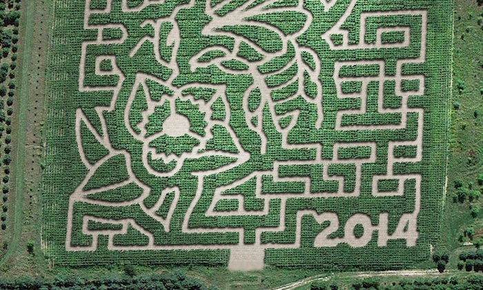 Montgomery Orchard - Montgomery, Minnesota: Corn Maze Admission for Four or Six at Montgomery Orchard (Up to 56% Off)