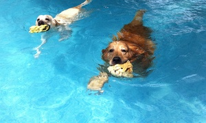 Top Dog Hydrotherapy Spa: Doggy Swimming Session For One (£9) or Two (£17) Dogs at Top Dog Hydrotherapy Spa