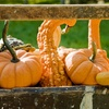 Up to 51% Off Pumpkin Patch and Petting Zoo
