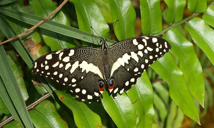 World Of Wings - Teaneck: Butterfly-Exhibit and Museum Visit for Two or Four at World of Wings (Up to Half Off)