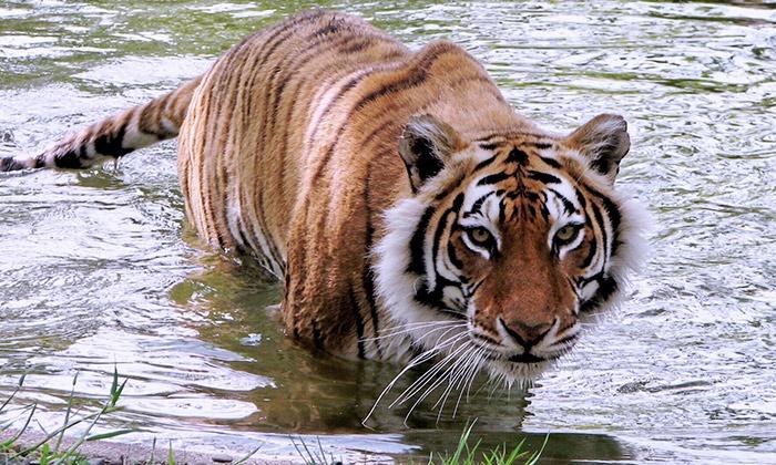 Wildlife Safari - Winston: $39 for Wild lights Event and Drive-Through Safari for Four at Wildlife Safari (Up to $91.96 Value)