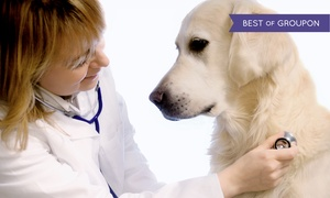 Camino Seco Pet Clinic: $249 Dental Cleaning at Camino Seco Pet Clinic ($500 Value)