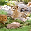 Tiger Cub or Lion Cub Garden Statue