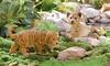 Tiger Cub or Lion Cub Garden Statue: Tiger Cub or Lion Cub Garden Statue