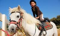 Une demi-journée ou une journée de stage déquitation pour 1 enfant dès 24,90 € au Écuries de Loubresse