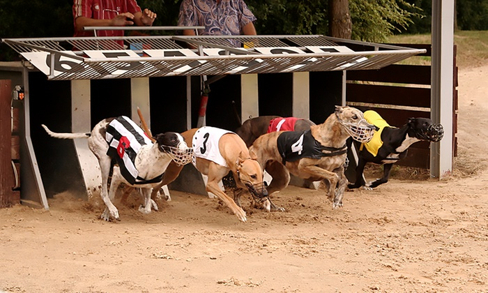 henlow dogs betting odds