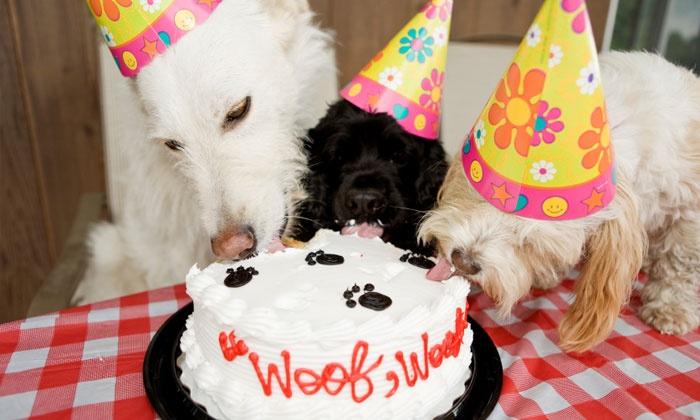 Poochie Trends Pet Bakery - Poochie Trends Pet Bakery: Three Custom Dog Treat Bags or Dog Party-to-Go Package from Poochie Trends Pet Bakery (Up to 44% Off)