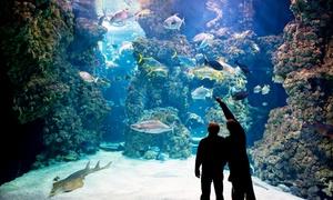 Musée Océanographique de Monaco: 1 entrée pour adulte ou enfant (basse saison) pour le Musée Océanographique de Monaco à 5,50 €