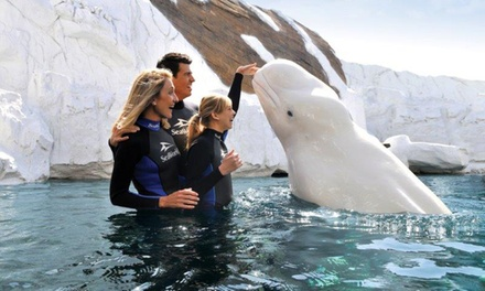 Single-Day Ticket with Optional All-Day Dining to SeaWorld San Diego (Up to 22% Off).