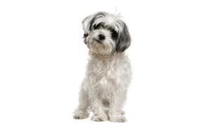 Pet Poo Skiddoo: $18 for $40 Worth of Dog Waste Removal Services — Pet Poo Skiddoo