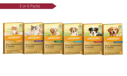 Advocate Flea and WormTreatment for Cats and Dogs: Three-Pack (from $49) or Six-Pack (from $75)