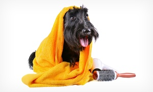 Spa de Mascotas: Sesión de peluquería para perros y gatos con lavado, arreglo y corte desde 11,95 € en Spa de Mascotas