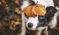 One-Hour Pet Photoshoot with £50 Voucher Towards Prints at CatsDog Photography (91% Off)