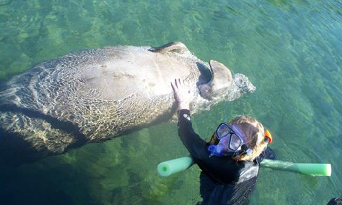 Nature Coast Manatee Tours - Homosassa: $175 for a Four-Hour Private Manatee Tour for Up to Six at Nature Coast Manatee Tours (Up to $350 Value)