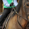 Up to 59% Off Horse-Riding Lessons in Watertown