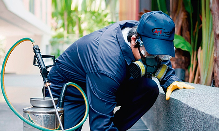 A-1 Pro Termite and Pest Control - Rio Grande Valley: Exterior Perimeter Pest Control Treatment and Termite Inspection from A-1 Pro Termite and Pest Control (74% Off)