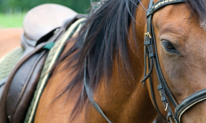 Fairview Farms Jjc - Brimfield: $74 for One Month of Horseback Riding Lessons With Up to 12 Lessons from Fairview Farms JJC ($135 Off)