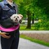 Hands-Free Pet Travel Carrier Shoulder Sling Bag