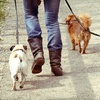 Up to 75% Off Relief Dog Walks