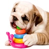 Up to 51% Off Dog Daycare or Boarding
