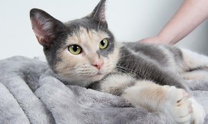 Delaware Humane Association: Full Adoption Fees for One or Two Adult or Senior Cats at the Delaware Humane Association (50% Off)