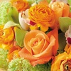 Half Off Floral Designs and Delivery