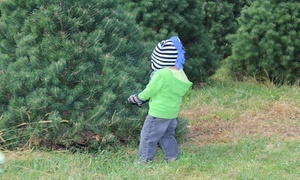 Bartels Farm: $32 for Cut-Your-Own Eastern White Pine or Scotch Pine Christmas Tree with Bag at Bartels Farm ($58 Value)