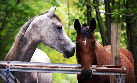 One or Three 60-Minute Private Horseback-Riding Lessons at Valley View farm (Up to 62% Off)