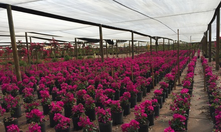 Plants and Trees at Springtime Farm Plant Nursery (Up to 50% Off)